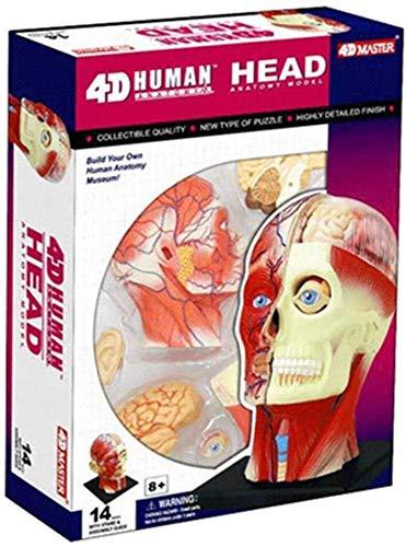 Simulierte anatomisches Modell Abnehmbare Puzzle Montag Spielzeug, Anatomisches Modell der menschlichen Kopf Muskeln und Nerven, Geeignet for Heim- und Lernen im Klassenzimmer Menschliches Organ Model