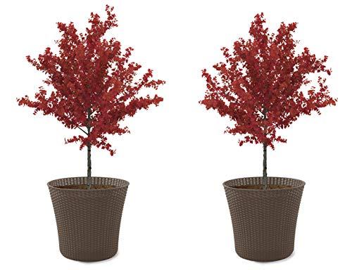 Keter Conic 15 Gallon Resin Wicker Flower Pot Set-2 Large Indoor Garden or...