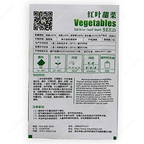 100seeds/sac de semences de col Chine vegetable Seeds col vert plantation des semences de des saisons