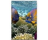 SIN-US 74 Korallenriff mit tropischen Fischen – Rotes
