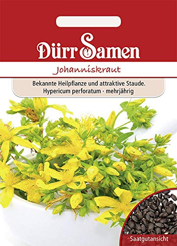 Dürr-Samen - 100 x Johanniskraut Saatgut für Küche, Balkon, Hochbeet & Gewächshaus - Johanniskrautsamen zum Pflanzen für Kräutergarten - Johannis-Kraut Samen Saat als Tee-Pflanze zum Anbauen