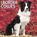 Willow Creek Press: Just Border Collies 2020 Wall Calendar (