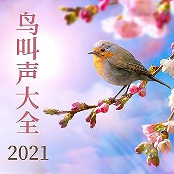 鸟叫声大全2021: 纯净自然声, 放松冥想静心音乐, 春季冥想