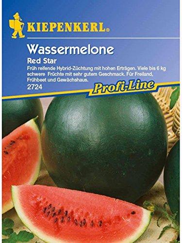 Melonen Wassermelone Red Star F1