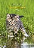 Tatzentiger 2020 A&I - Wandkalender A3 - 29,7x42cm - Katzenkalender - Tierkalender