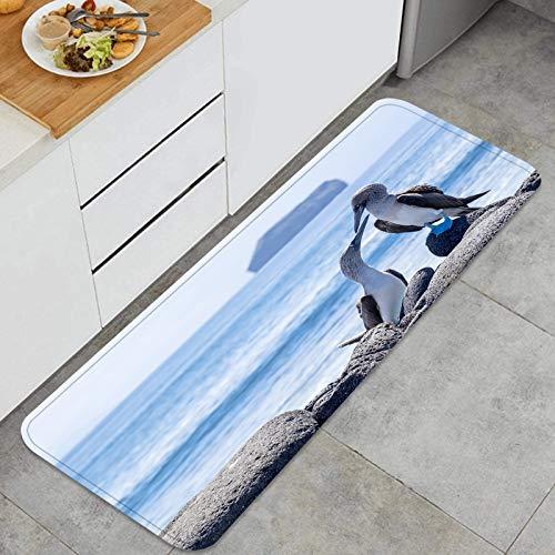 YANAIX Küchenmatte Teppich,Paar blaufüßige Tölpel auf den Lavasteinen von der,für Küche Bodenhaus Büro Waschbecken Wäscherei Super saugfähig und rutschfest