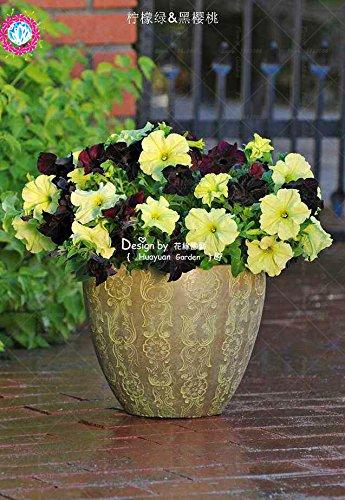 100 pcs/sac à double pétales graines de pétunia graines de fleurs bonsaï fleurs court jardin hauteur des graines de pot de plante d'intérieur ou ourdoor 7