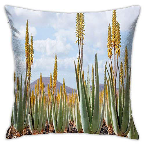 FULIYA Abstract Art Decorative Pillow Cover 18x18,Photo from Aloe Vera Plantation Medicinal Leaves Remedy Fuerteventura Canary Islands,Square Pillowcase for Living Room/Car