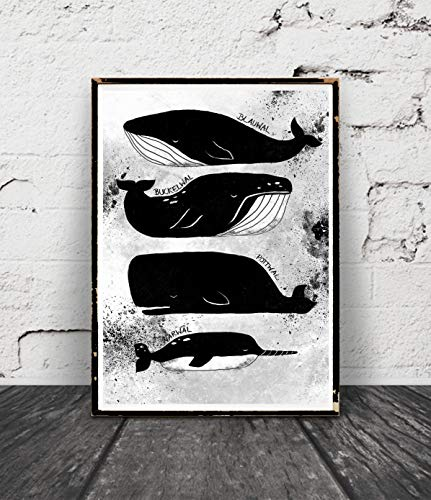 Walposter Aquarell Tusche, schwarzweiss, Vintage, Wale Poster Handmade, Moby Dick, Narwal, Pottwal