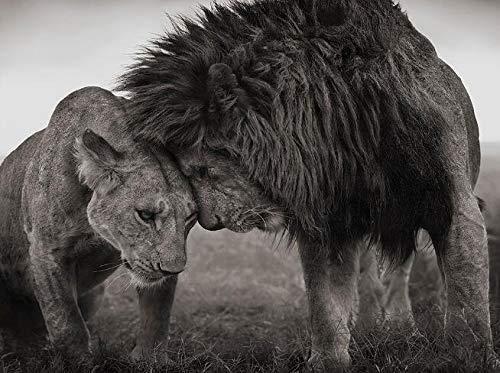 Lienzo decorativo para pared, diseño de pareja de leones africanos en blanco y negro