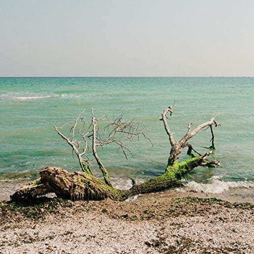 Nature Sounds Nature Music, Rain Sounds & Relajacion Del Mar