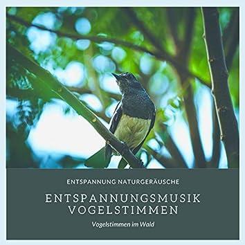 Entspannungsmusik Vogelstimmen – Entspannung Naturgeräusche, Vogelstimmen im Wald