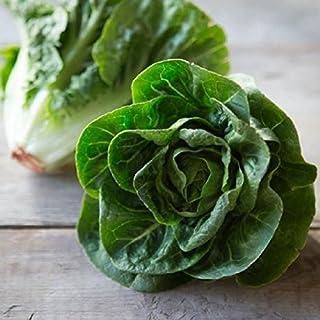 """Little Gem"" Romaine Lettuce Seeds, 1000+ Premium Heirloom Seeds, (Isla's Garden Seeds), Non GMO, 85% Germination, Highest Quality!"