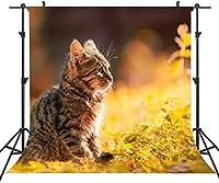 HD ST8x8FT素敵な写真の背景ペットの猫の背景個人的なパーティーの背景またはYOUTUBEの背景の小道具ST660036