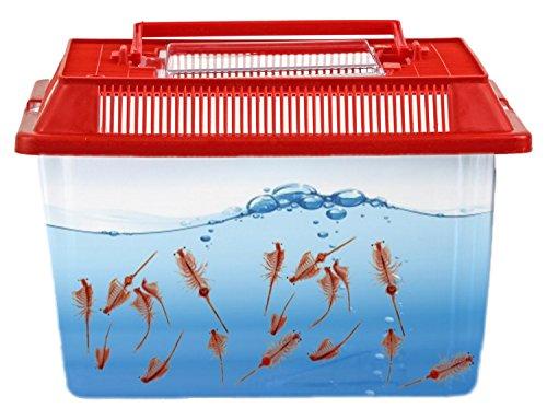 Nick and Ben Abenteuer Aquarium Terrarium XL ,,Rot,, für Urzeit-Krebse