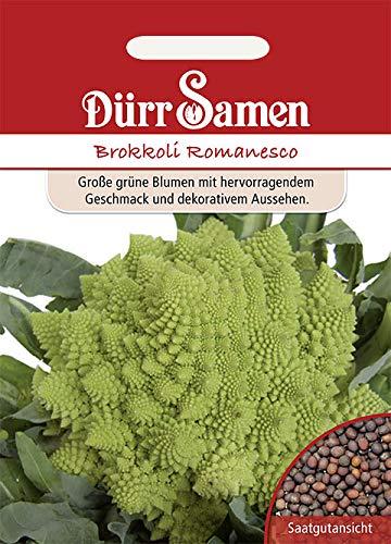 Dürr-Samen - 50 x Brokkoli