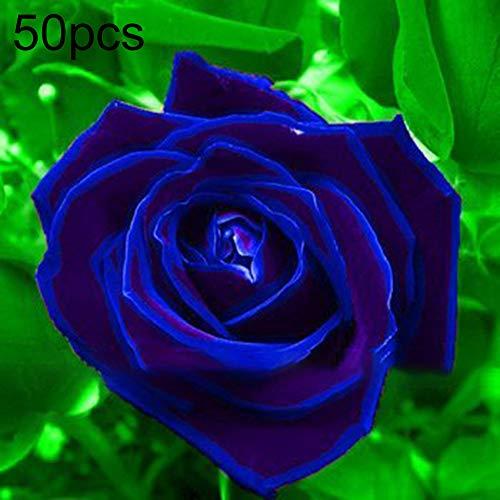 Lovejoy Store - Semillas de rosa azul (50 unidades), multicolor