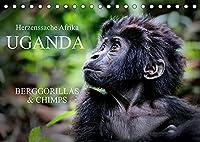UGANDA - Berggorillas & Chimps (Tischkalender 2022 DIN A5 quer): Zerbrechliche Wesen - Afrikas Menschenaffen (Monatskalender, 14 Seiten )