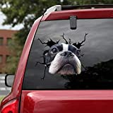 Ocean Gift Boston Terrier Car Decals, Wall Decals Stickers Pack of 2 - Realistic Car Stickers Design Series 22 Size 12' x 12'