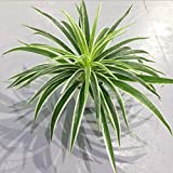 LUCACO Artificial Plastic Plants Chlorophytum Artificial Flowers Spider Plant Fake Greenery Home Decorative Indoor Outside Home Garden Office Verandah