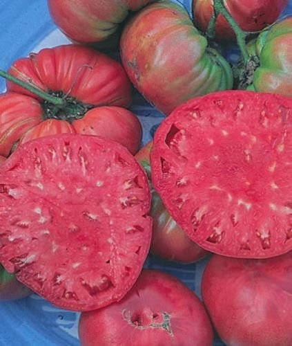 30 semillas GIGANTE BÉLGICA ROSA DE TOMATE DE LA HERENCIA 2018