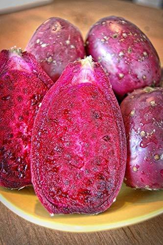 shipfree Melissa's Fresh Translated Cactus Pears of 10 Set