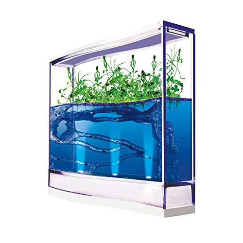 Hormiguero de Gel Azul con LUZ y SEMILLAS (Hormigas incluidas Gratis): Amazon.es: Juguetes y juegos