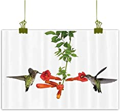 SEMZUXCVO Modern Frameless Painting Hummingbirds Decorations Two Hummingbirds Sip Nectar from A Trumpet Vine Blossoms Summertime for Living Room Bedroom Hallway Office W47 x L31