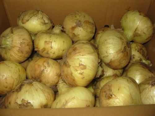 佐賀県産、淡路島産 新玉ねぎ Lサイズ 10kg詰め 玉葱 タマネギ たまねぎ