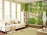 """Komar 8–519–368x 254cm National Geographic Domenica Primavera carta da parati di""""Foresta Alberi di betulla, colore: verde (Confezione da 8)"""