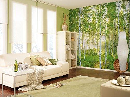 Komar Vlies Fototapete SUNDAY | 368 x 248 cm | Tapete, Wand, Dekoration, Wandbelag, Wandbild, Wanddeko, Wald, Birkenwald | XXL4-519