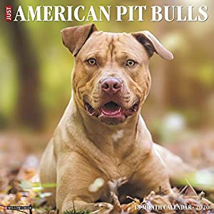 Just American Pit Bull Terriers 2020 Wall Calendar (Dog Breed Calendar) 13