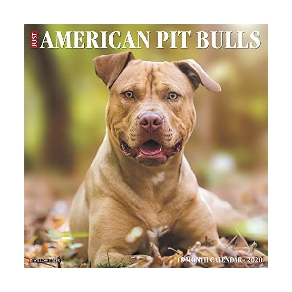 Just American Pit Bull Terriers 2020 Wall Calendar (Dog Breed Calendar) 1