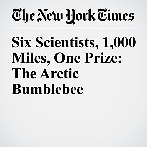 Six Scientists, 1,000 Miles, One Prize: The Arctic Bumblebee audiobook cover art