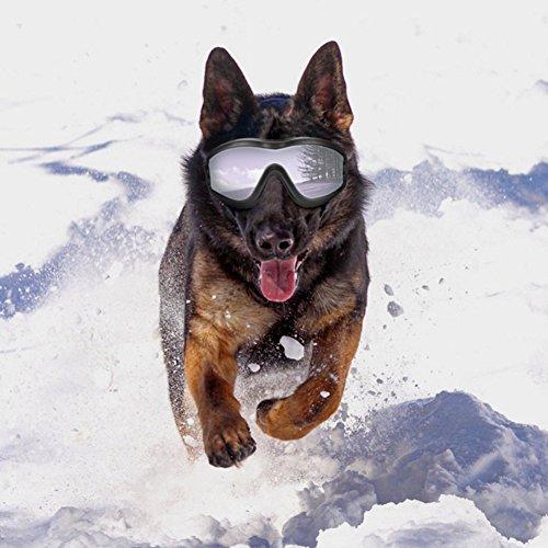 Gafas de sol para perro, resistentes al viento, a prueba de sol