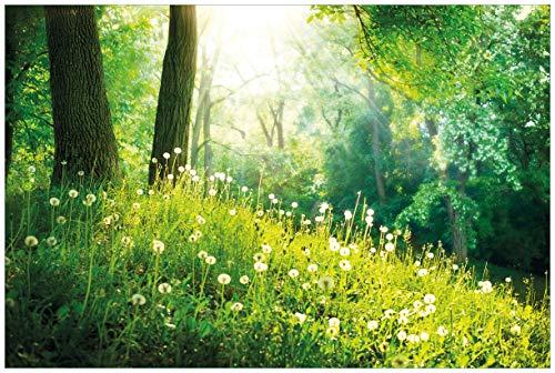 Wallario Acrylglasbild Pusteblumen im Wald mit einfallenden Sonnenstrahlen - 60 x 90 cm in Premium-Qualität: Brillante Farben, freischwebende Optik