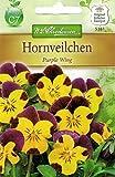 Chrestensen Hornveilchen 'Purple Wing' Viola cornuta