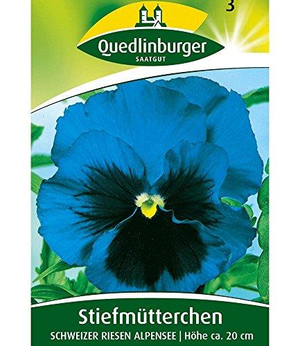 Stiefmütterchen blau 'Schweizer Riesen', 1 Tüte Samen