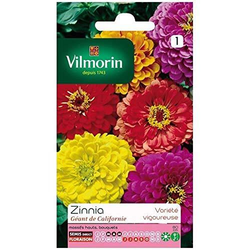 Vilmorin - Sachet graines Zinnia Géant de Californie
