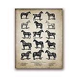 LiMengQi Vintage Farm Animals Poster Print Chicken Pig Sheep and Horse Arte de la Pared Pintura de la Lona Retro Animal Picture Decoración del hogar (Sin Marco)