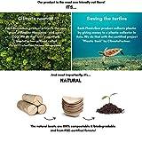 50 x Snackschalen natur 22cm   100% kompostierbar   edel & dekorativ   Bio Einweg-Geschirr   Einwegschalen perfekt für Finger-Food   Party-Geschirr Holzschiffchen - 3