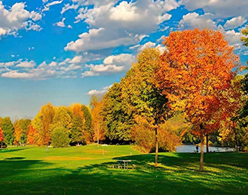 MQPPE Landscape 5D DIY Diamond Painting Kits, Fall Foliage and A Field Autumn England New Fall Forest Tree Field Full Drill Painting Arts Set Craft Canvas for Home Wall Decor Adults Kids, 16' x 20'