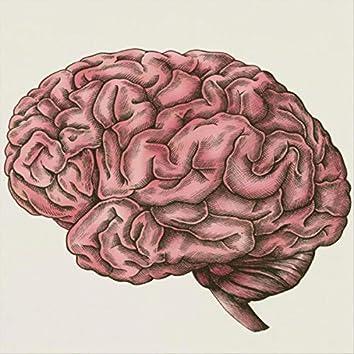 Noises for the Brain