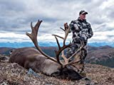 A Fall Classic: Mountain Caribou