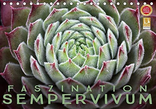 Faszination Sempervivum (Tischkalender 2020 DIN A5 quer): 12 wundervolle Sempervivum Portraits (Monatskalender, 14 Seiten ) (CALVENDO Natur)