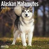Alaskan Malamutes Calendar 2020