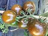 semi pomodoro nerondo f1