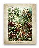 JCYMC Ernst Haeckel Biologie Poster Palme Drucke Vintage