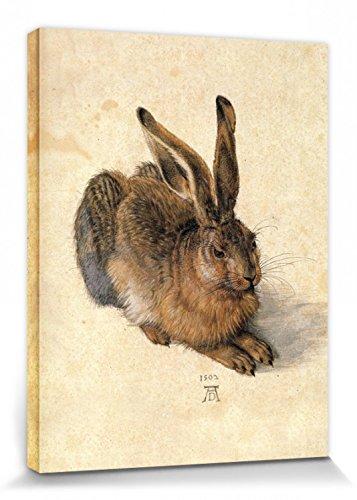 1art1 Albrecht Dürer - Junger Feldhase, 1502 Bilder Leinwand-Bild Auf Keilrahmen | XXL-Wandbild Poster Kunstdruck Als Leinwandbild 40 x 30 cm