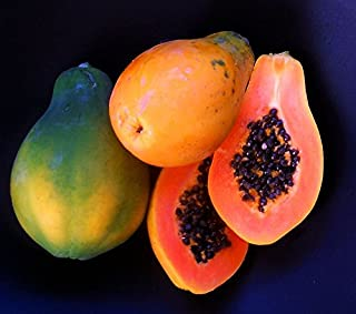 10+ Very Fresh! Strawberry Papaya! tropical fruit tree seeds plant VERY EASY!